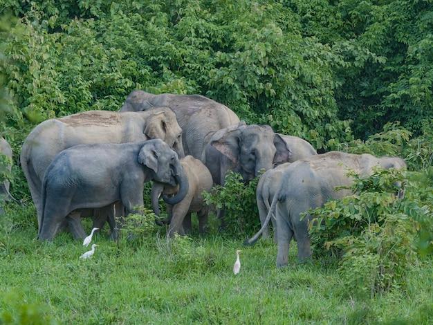 Grupa słoni w lesie.