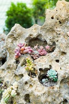 Grupa sukulentów rosnących na glebie i żwirze