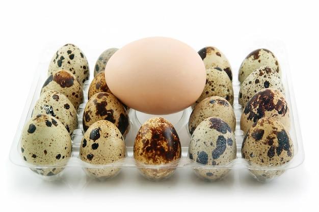 Grupa surowi przepiórek jajka w pudełku odizolowywającym na bielu