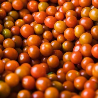 Grupa świeżych soczystych pomidorów cherry na sprzedaż