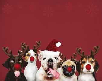 Grupa szczeniąt w strojach bożonarodzeniowych