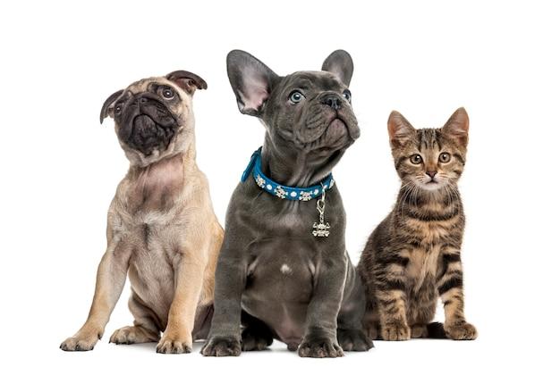 Grupa szczeniąt i kot siedzi