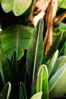 Grupa tropikalnych zielonych liści