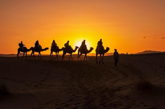 Grupa turystów prowadzona przez miejscowego przewodnika beduinów jadących na wielbłądach do pustynnego obozu na saharze. zachód słońca, złota godzina