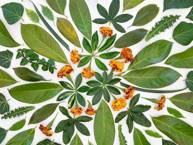 Grupa widok z góry zielonych liści i kwiatów