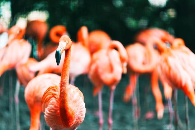 Grupa zebranych wokół flamingów