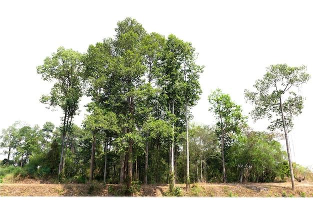 Grupa zielone drzewo izolować na białym tle