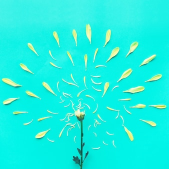 Grupa żółte płatki kwitną na niebiesko