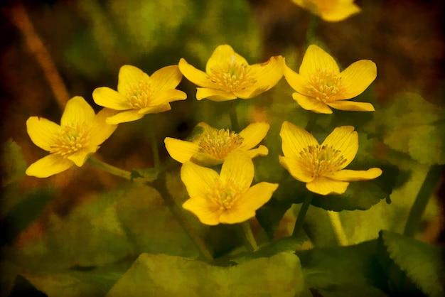 Grupa żółtych zimowych kwiatów tojadu