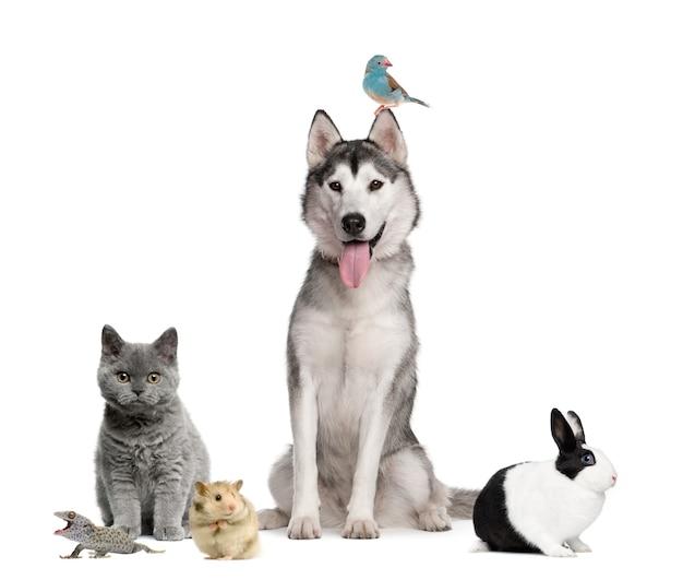 Grupa zwierząt domowych przed białą powierzchnią