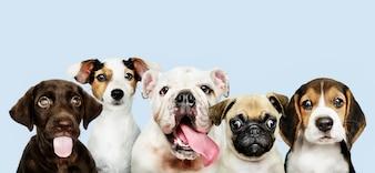 Grupowy portret uroczy szczeniaki