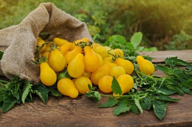 Gruszka w kształcie żółtego pomidora na drewnianym stole