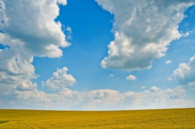 Gryka pięknie pięknie słoneczny dzień
