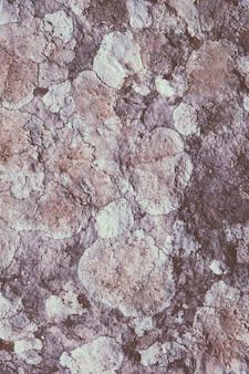 Grzyb i porosty na skale
