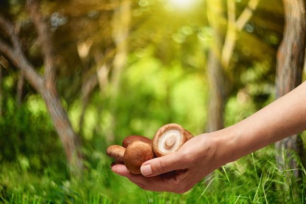 Grzyb jadalny w ręku na tle lasu, sezon letni