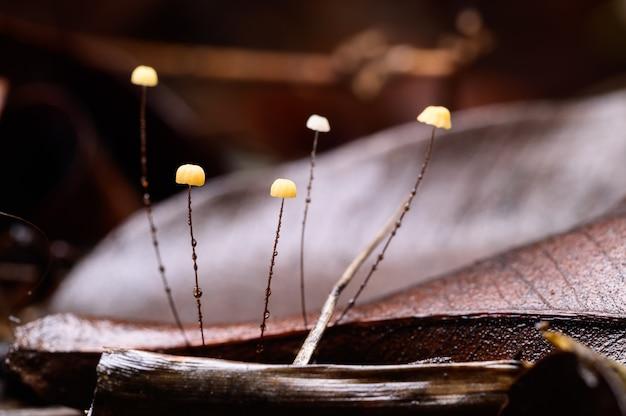 Grzyb rośnie w naturalnym lesie