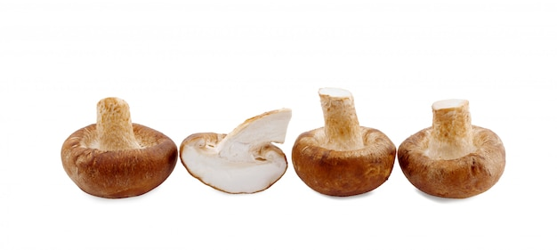 Grzyb shiitake na białym