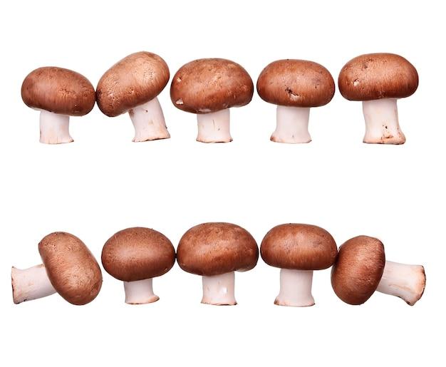 Grzyby i surowe grzyby na białym tle