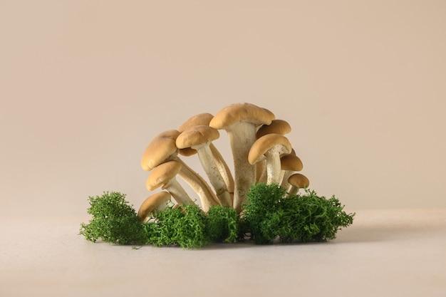 Grzyby miodowe w koncepcji lasu zbierają grzyby