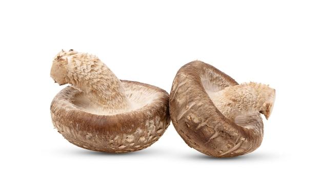 Grzyby shiitake na białym tle