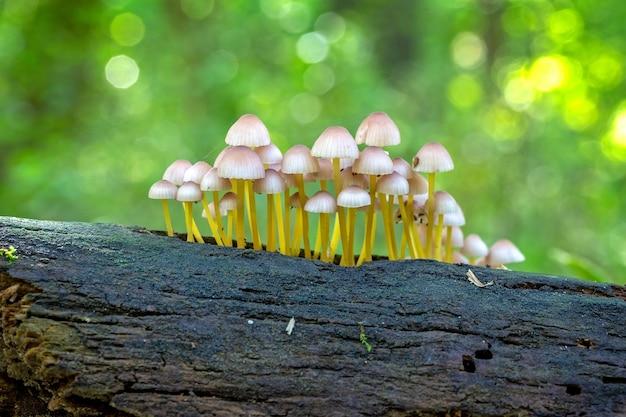 Grzyby w lesie na starym pniu