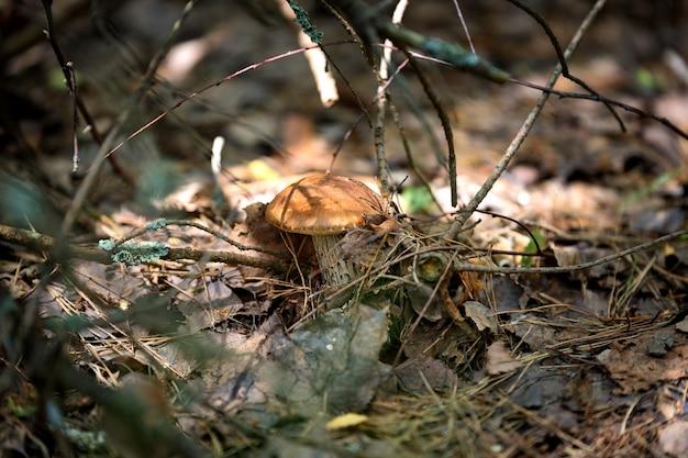 Grzyby w przyrodzie z płytką głębią ostrości