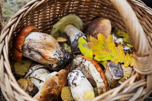 Grzyby w sezonie jesiennym