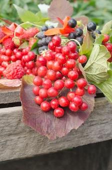 Guelder róży jagody lub strzałka drewna na drewnianym stole