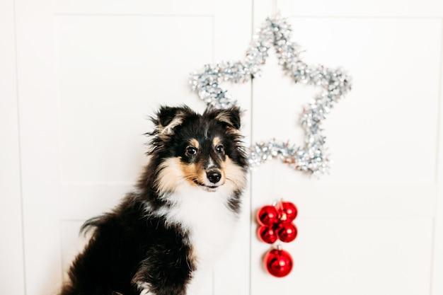 Gwiazda i kulki czerwony wystrój domu zakorzeniony na nowy rok i boże narodzenie, tło, błyszczący, siedzący szczeniak