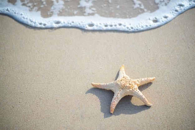 Gwiazdkowe ryby i muszle morskie na brzegu morza, stylizowane wyblakłe odcienie retro