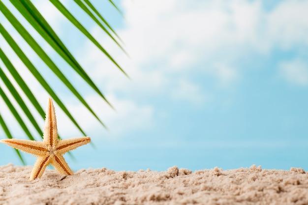Gwiazdy morskie na plaży. tło relaks.