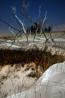 Gwiazdy na nocnym niebie nad gałęziami zwalonego drzewa zimą.