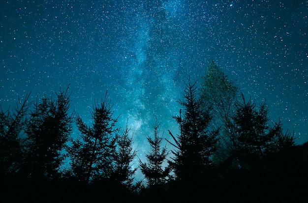 Gwiaździste niebo nad lasem sosen