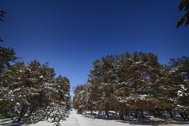 Gwiaździste niebo nad sosnowym lasem. sfotografowany w zimową noc przy pełni księżyca.