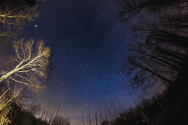 Gwiaździste niebo z lasu
