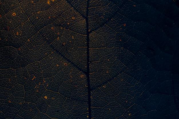 Gwiezdny liść agrestu tekstury makro w tle