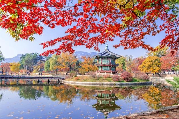 Gyeongbukgung i klon jesienią w korei.