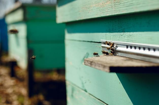 Hałas pszczół na ulu w ogrodzie