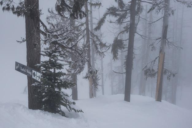 Halizny narciarstwa znaka deska na drzewie w śniegu, whistler, kolumbiowie brytyjska, kanada