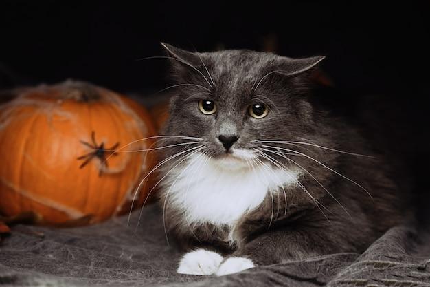 Halloweenowy kot kłama na łóżku