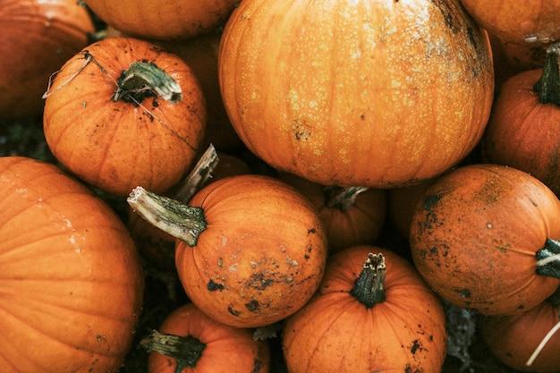 Halloweenowy stos dyni z bliska w tle