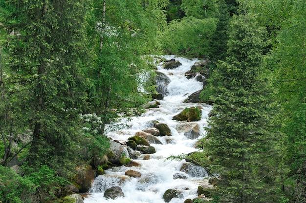 Halna lasowa rzeka z kamieniami i zielonymi roślinami