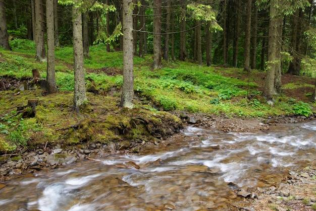 Halna rzeka płynie przez zielonego lasu. stream w lesie.