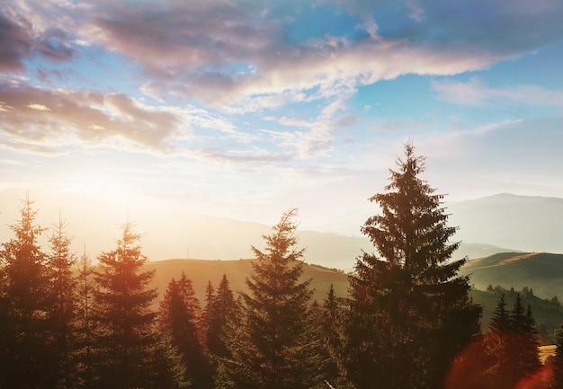 Halny jesień krajobraz z kolorowym lasem. dramatyczna scena poranna. czerwone i żółte jesienne liście. lokalizacja miejsce karpaty, ukraina, europa