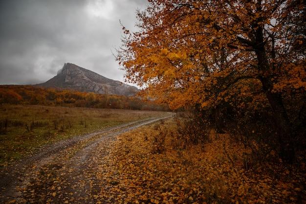 Halny jesień krajobraz z kolorowym lasem