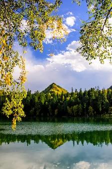 Halny jesieni zieleni syberia jezioro z odbiciem i gałąź brzoza