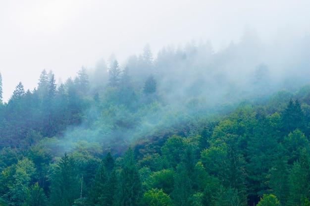 Halny las z mgiełką na drzewach