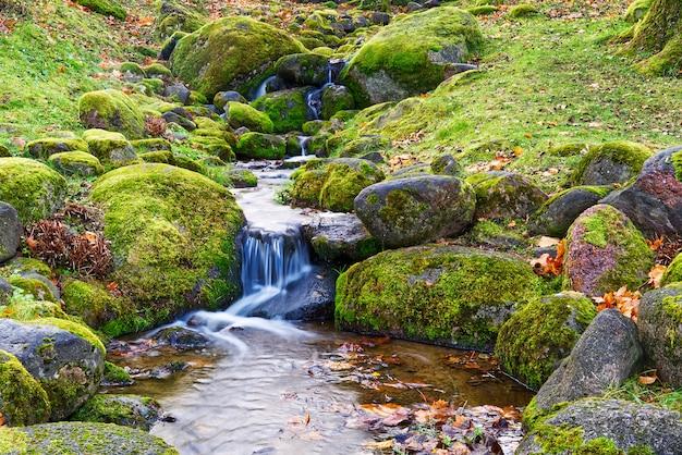 Halny potok w lesie jesienią