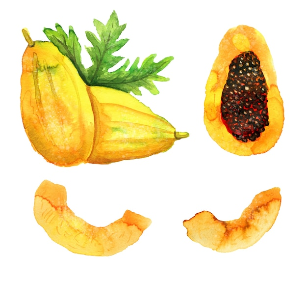 Handdrawn akwarela dojrzała papaja lub pawpaw na białym tle