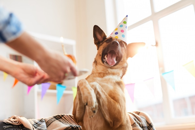 Happy dog on birthday